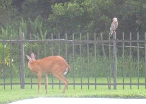 Deer-Owl