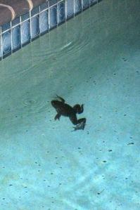 Frof in pool